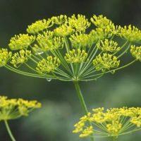 Магия растений. Травы-обереги для дома и семьи